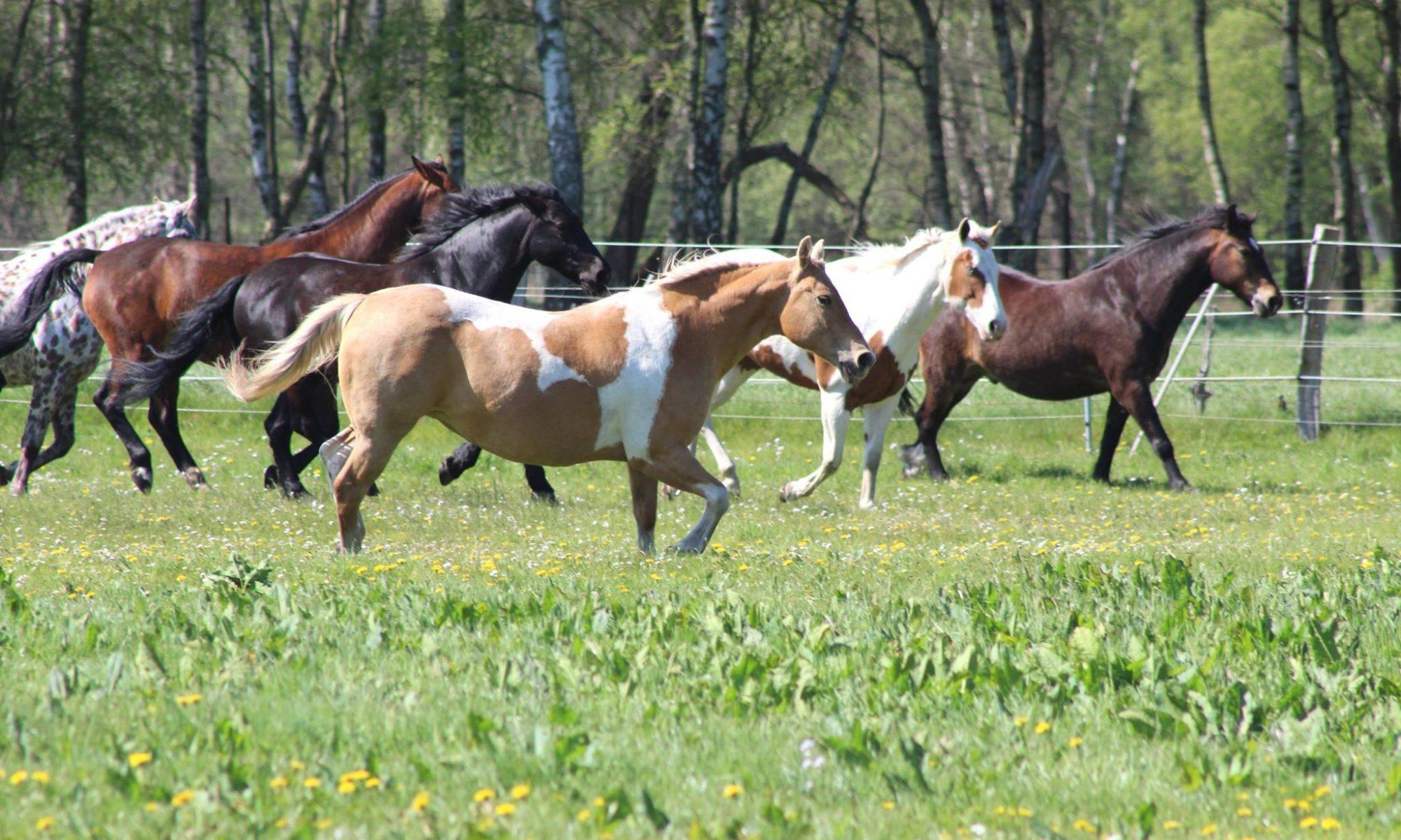 Labor für Zeitgemäße Selektive Entwurmung bei Pferden